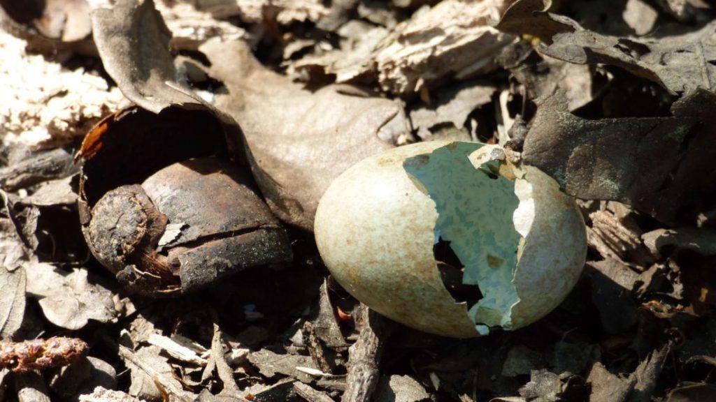 Coquille d'oeuf cassée à la pointe des émigrés de Vannes (56000)