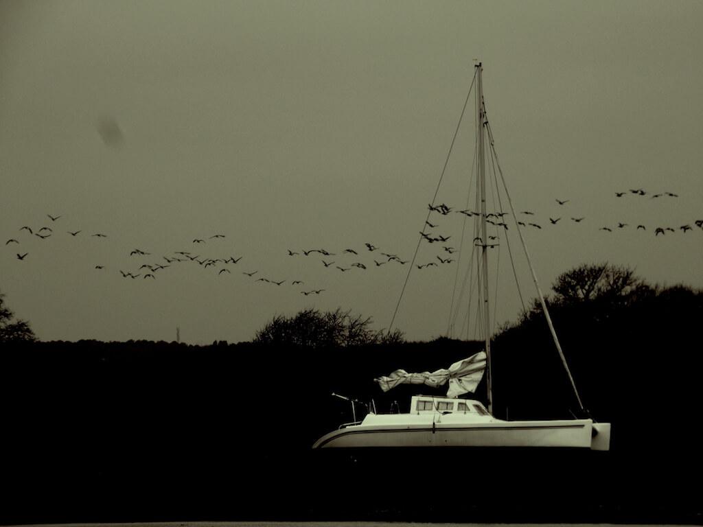 Paysage côtier breton