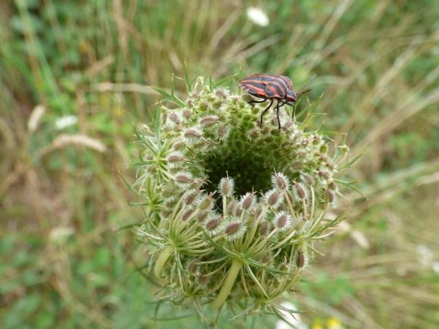 Nature bretonne