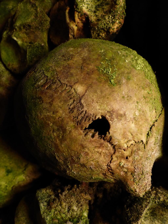 Crâne humain des Catacombes de Paris - Patrimoine et Monuments - 2017